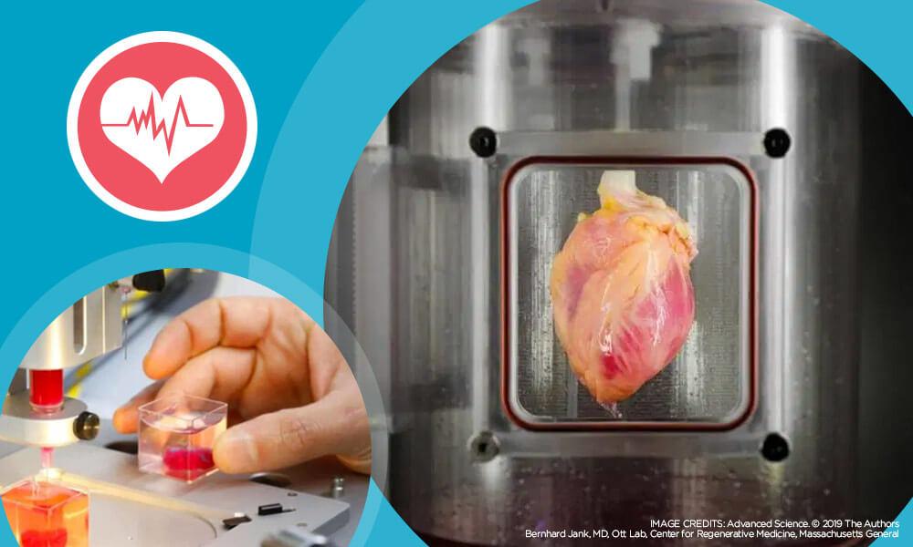 Учените отпечатват 3D сърце, използвайки стволови клетки